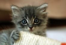 Hackney Council named cat care innovator