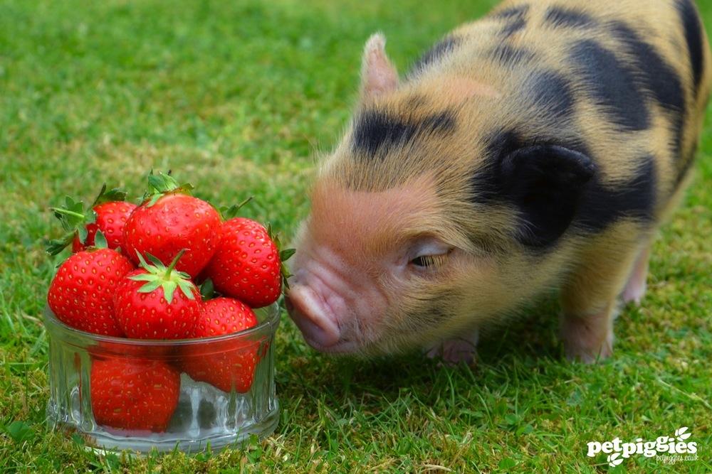 popup pig picnic heads for hackney hackney post
